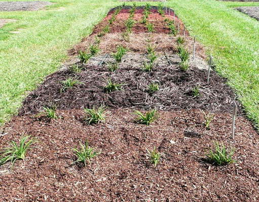 mulch research plots