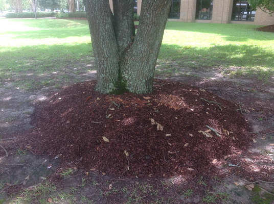 oak with mulch
