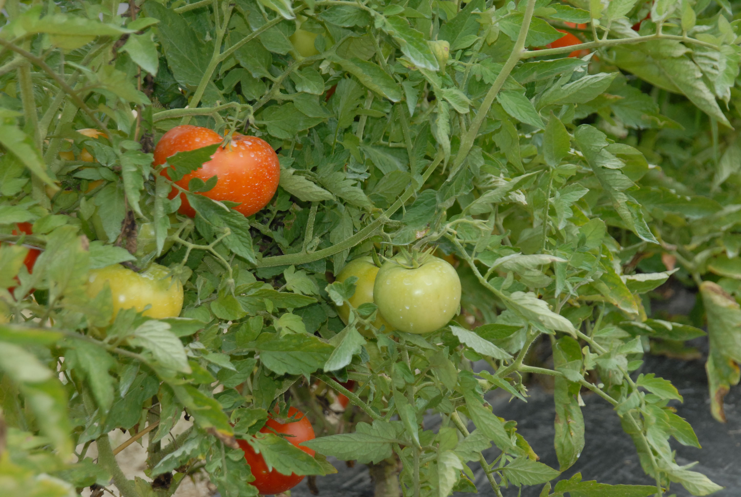 Workshop offers tips for organic farming