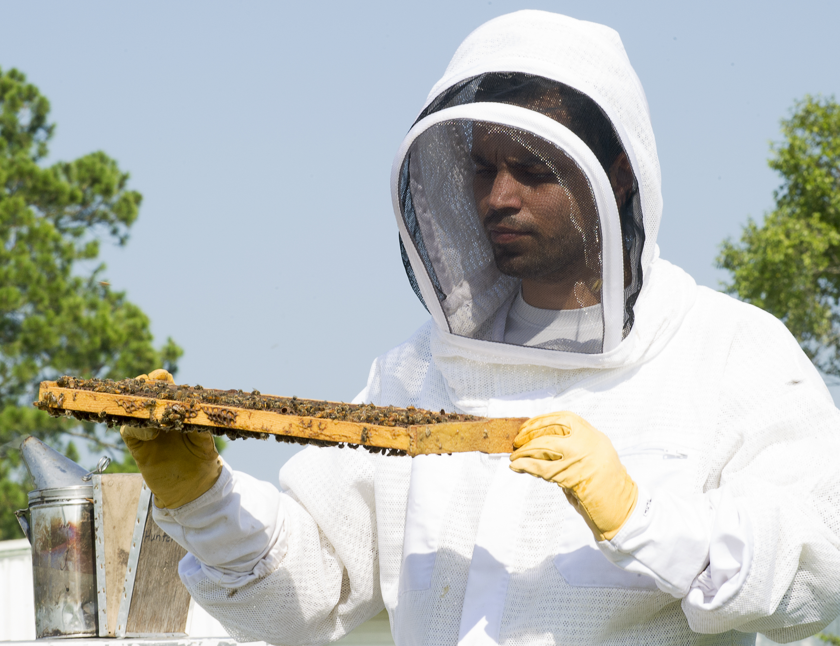 Study shows mosquito pesticides do not cause honeybee mortality