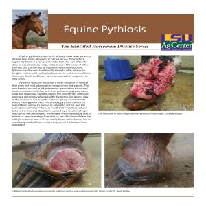 The Educated Horseman: Equine Pythiosis