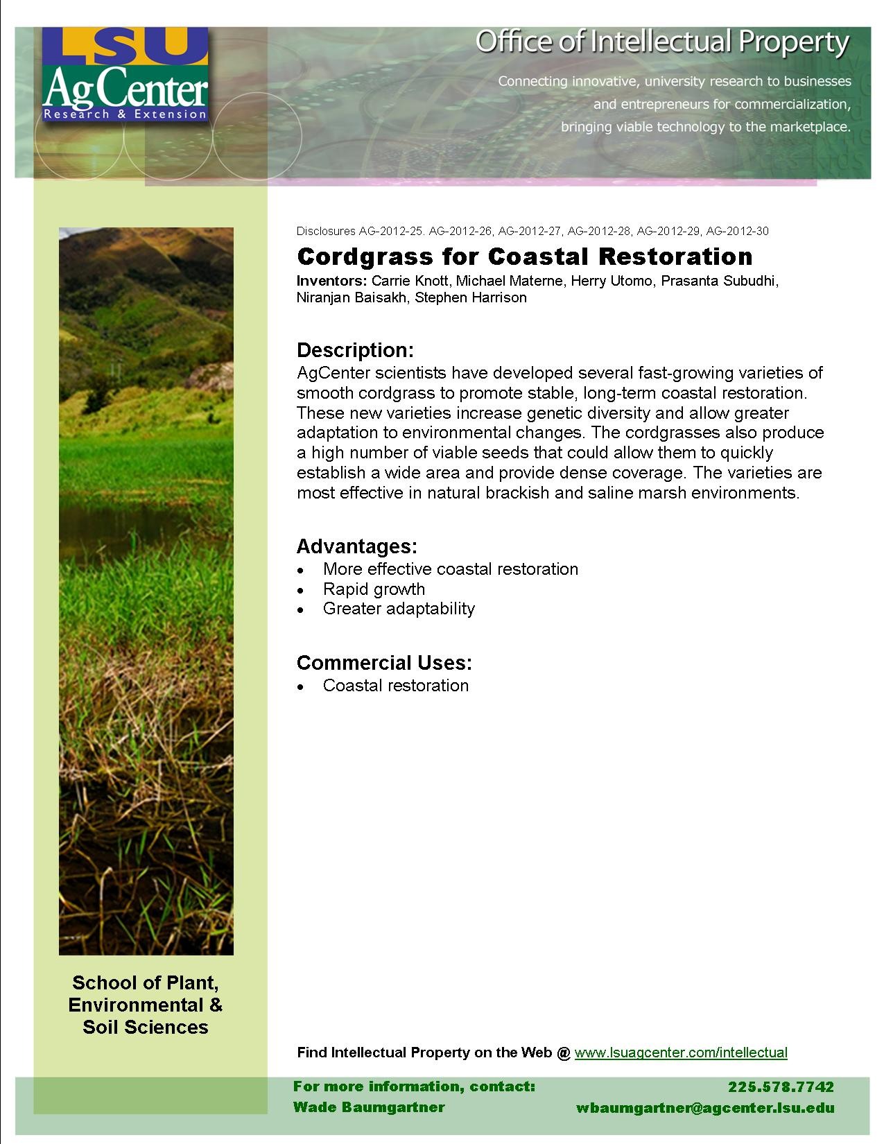 Cordgrass for Coastal Restoration