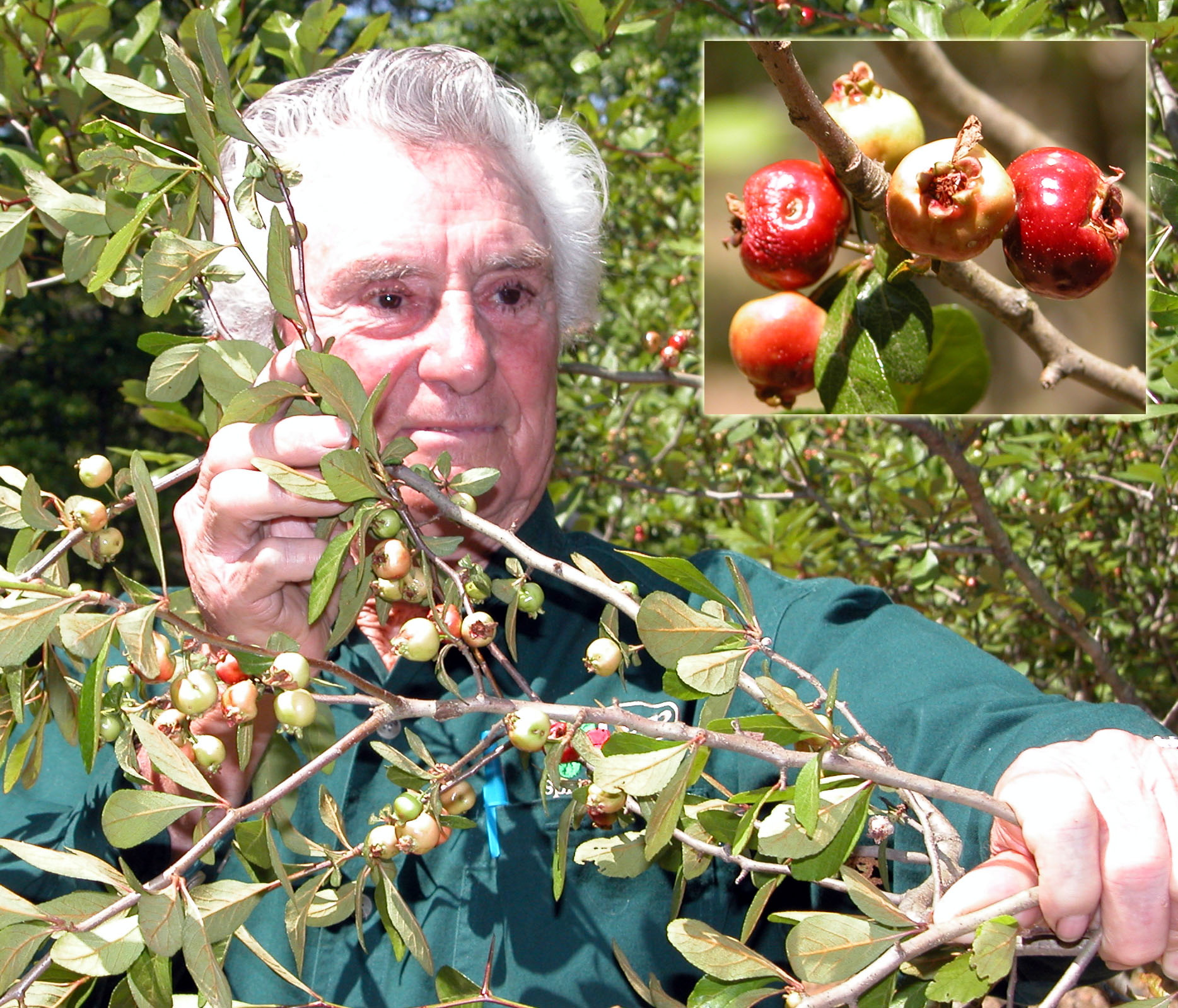 Mayhaw Growers Innovate Expand Industry