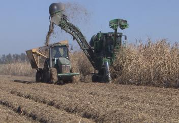 Sugarcane harvest is winding down