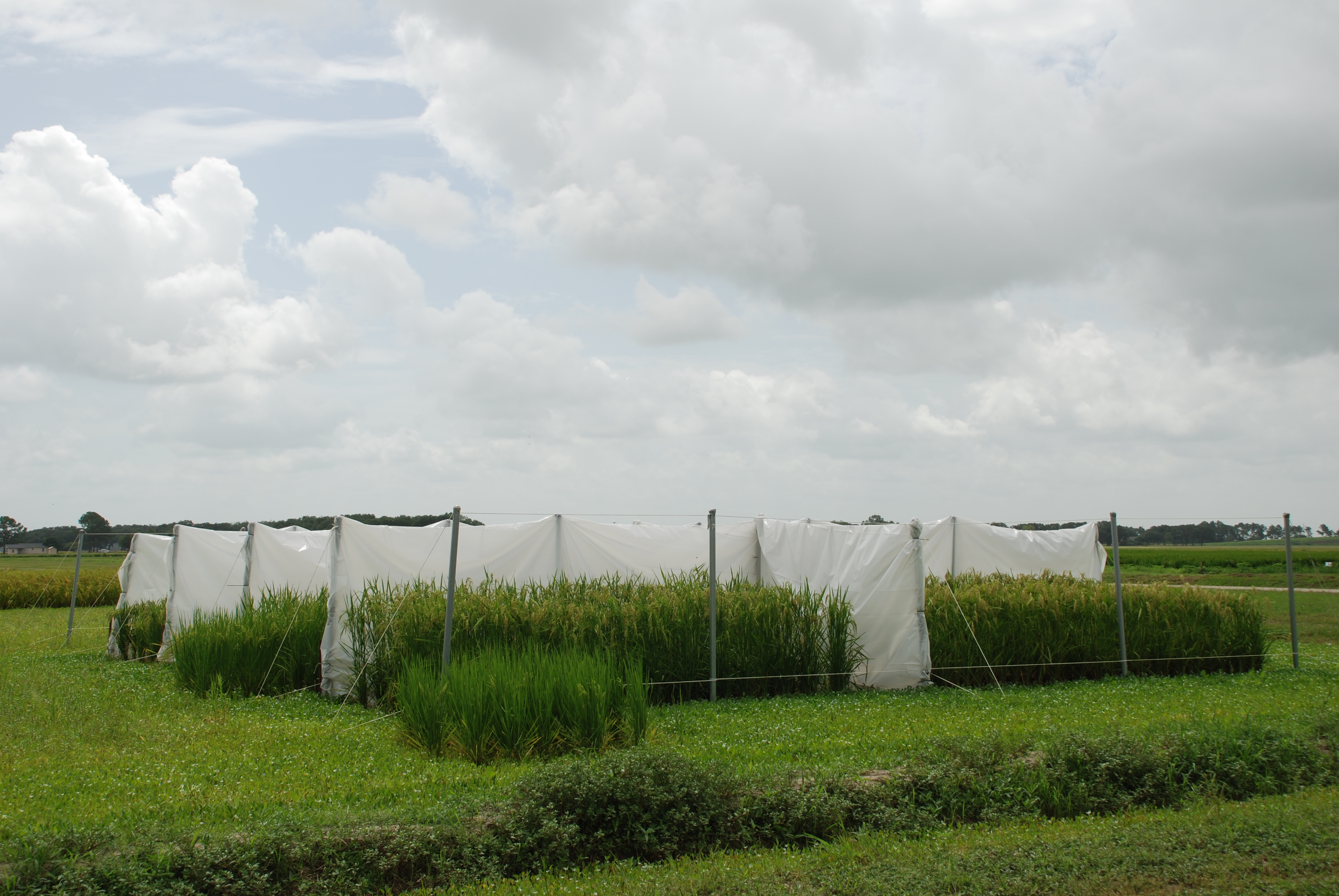 Rice Research Priorities Are Continual Moving Targets