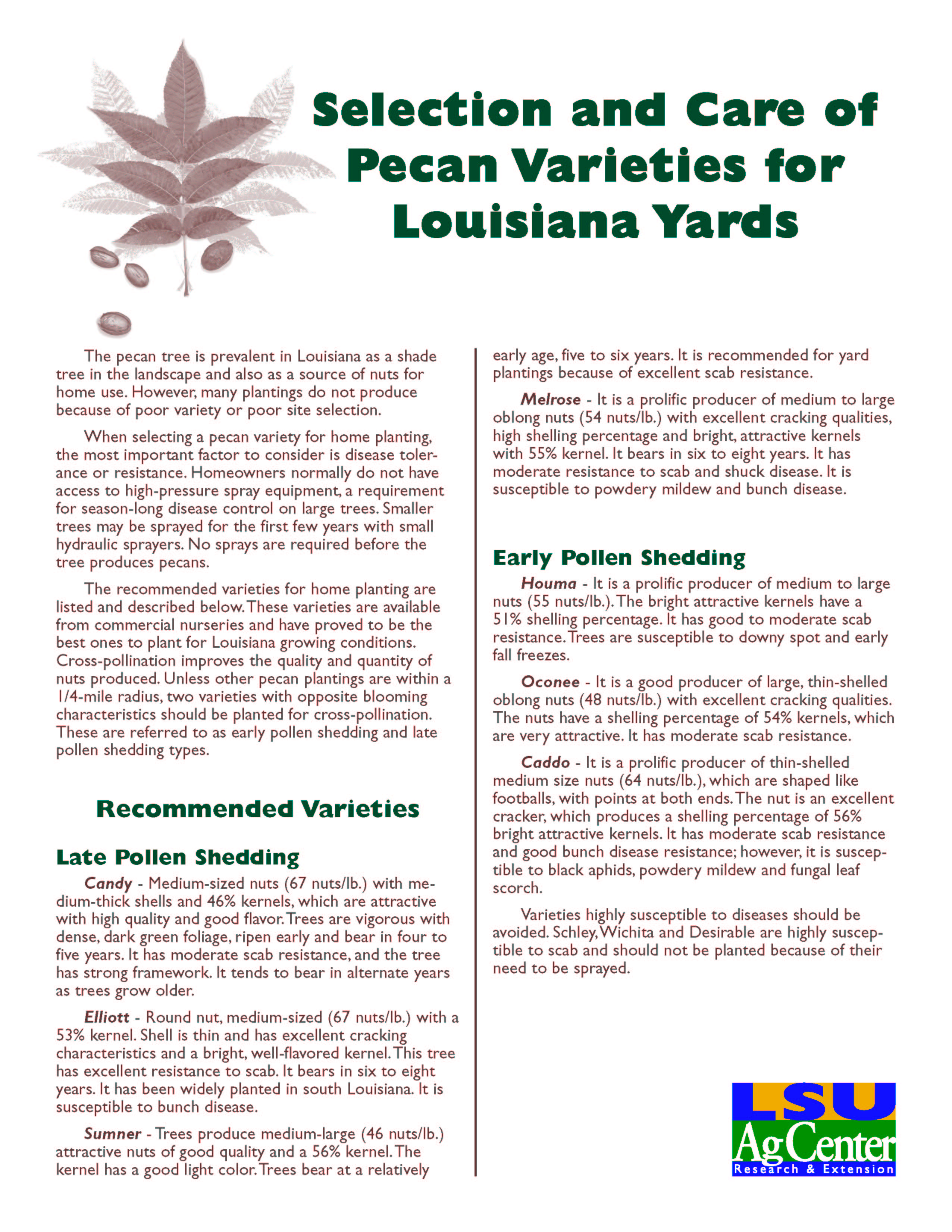 Selection and Care of Pecan Varieties for Louisiana Yards