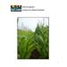 Louisiana Corn Hybrid Trial Results 2010