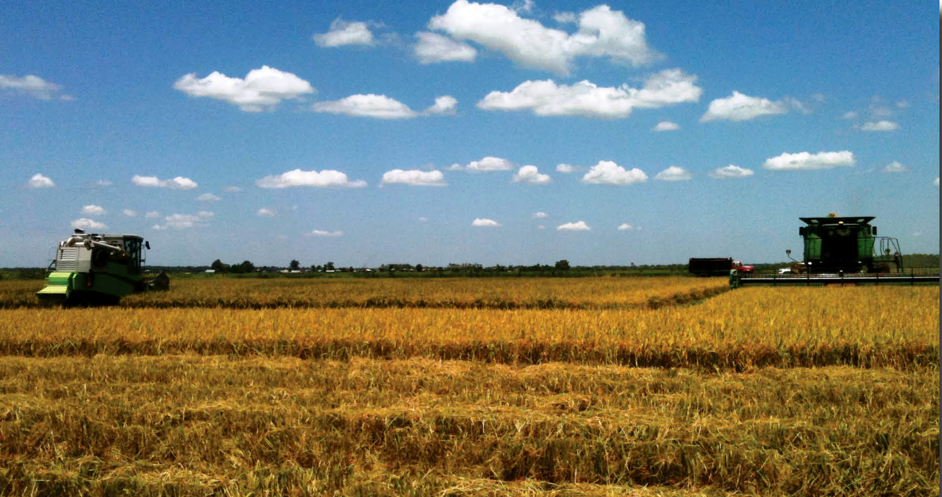 Photo of A specialized combine harvests off-station research plots in Evangeline Parish, while farme