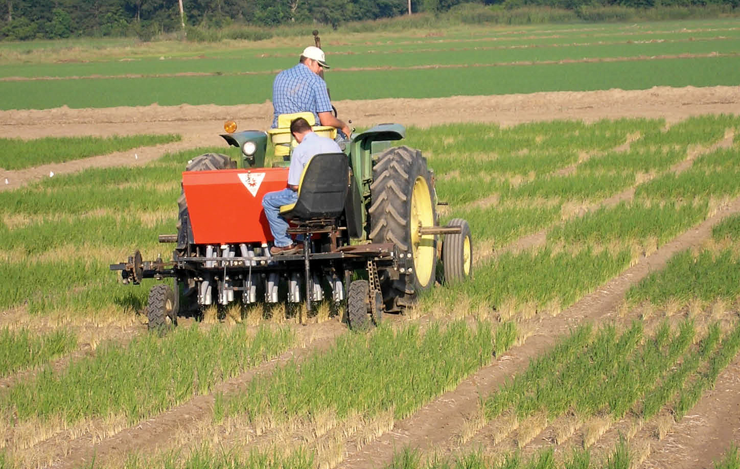 Photo of Dr. Dustin Harrell applies nitrogen on test plots near Rayville.