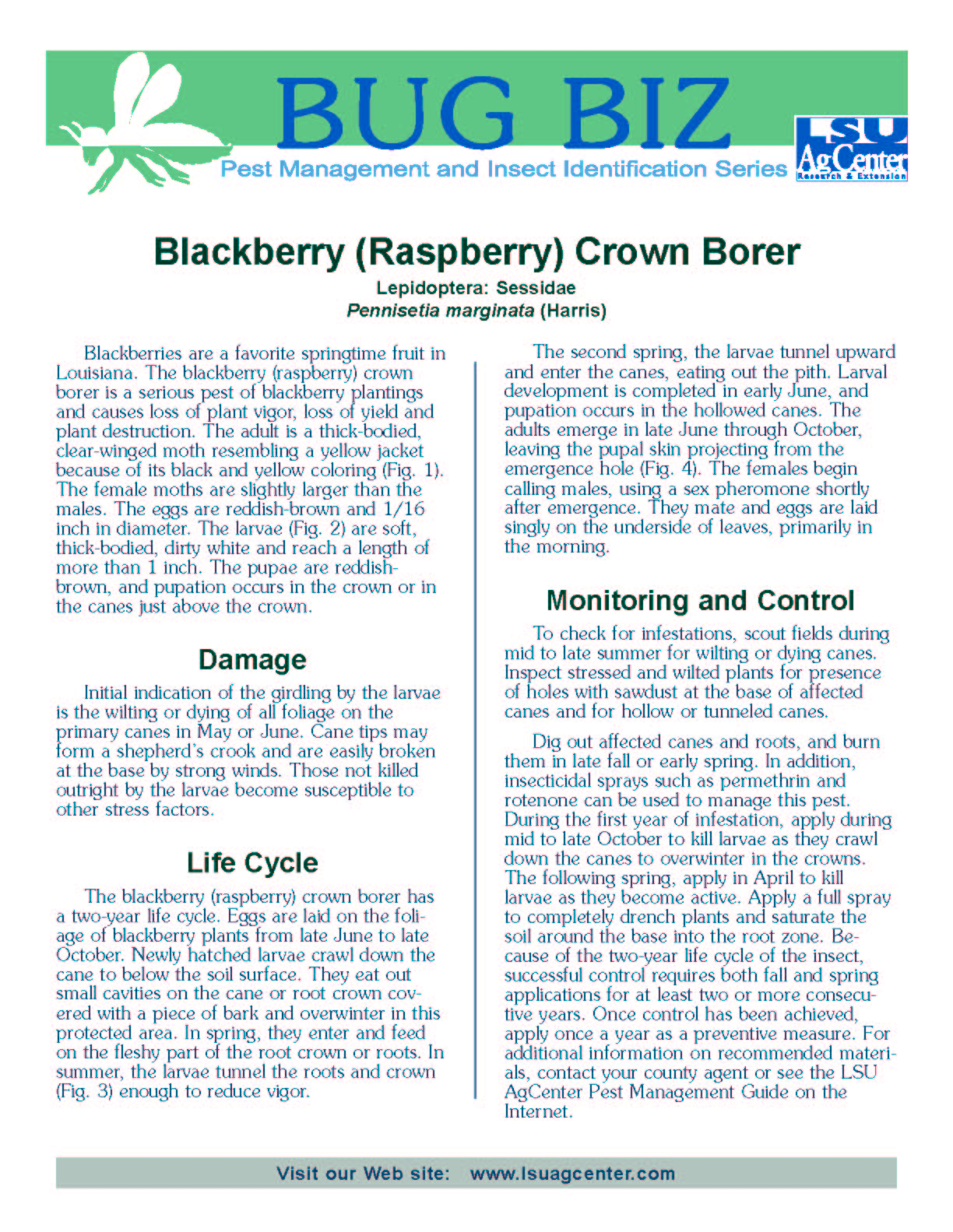 Bug Biz:  Blackberry (Raspberry) Crown Borer