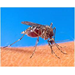 Mosquito Landing Rate Counts