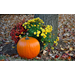Get Ready for Fall Gardening