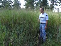 Image of switchgrass plot
