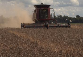 Soybean harvest exceeds previous record