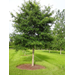 Here are some tips for selecting, planting trees