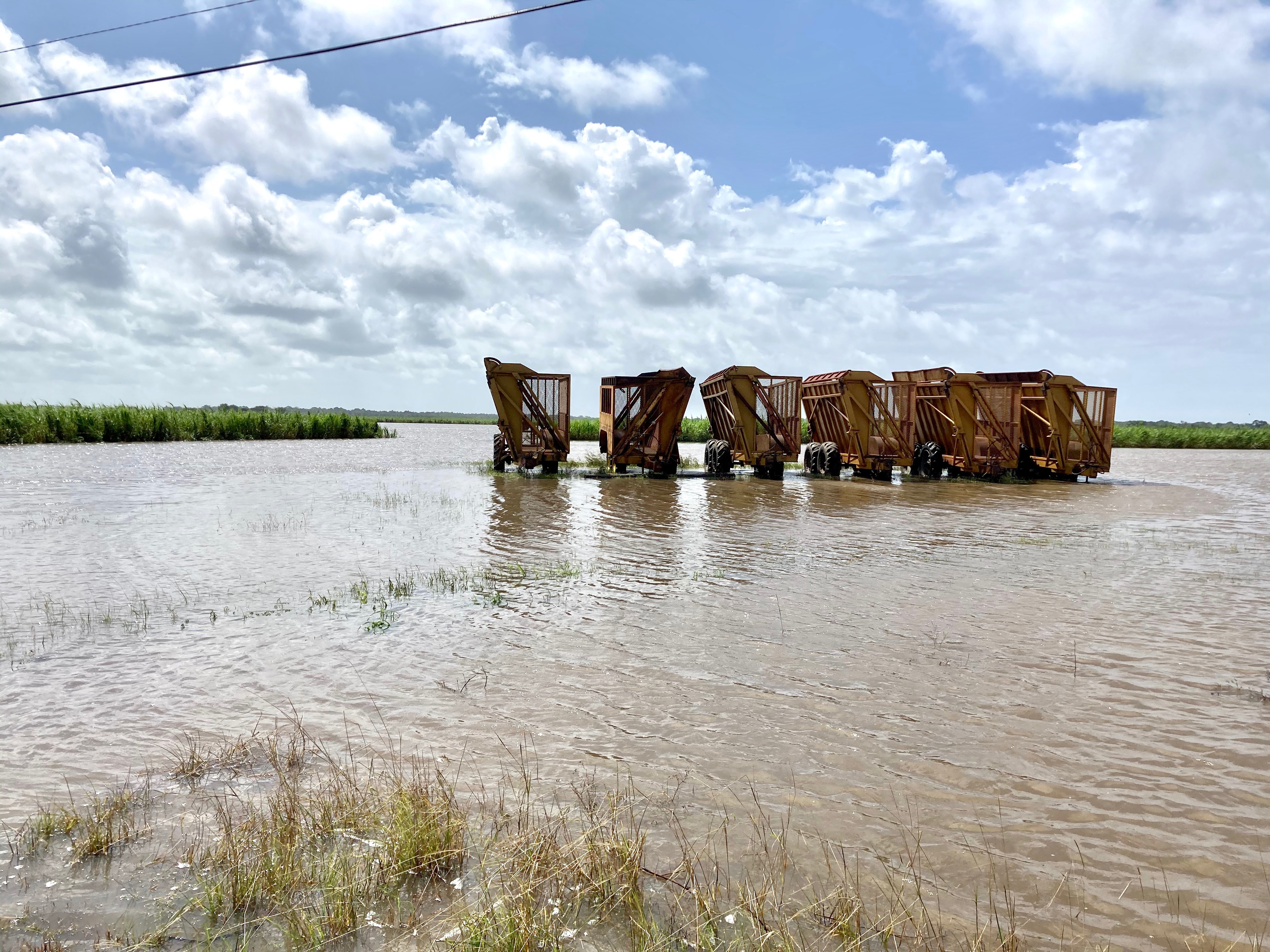 Cane carts in flooded field