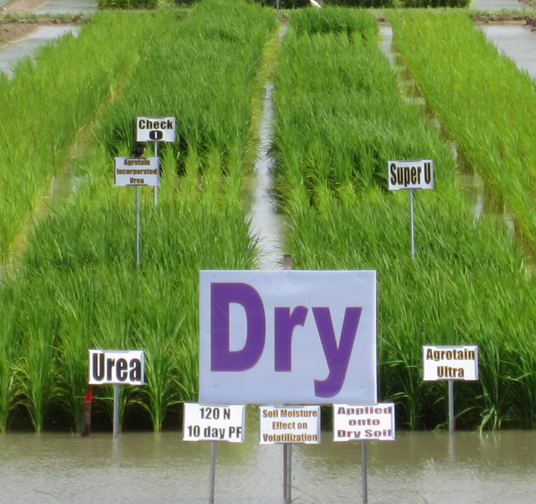 fertilizer study - dry ground.jpg thumbnail