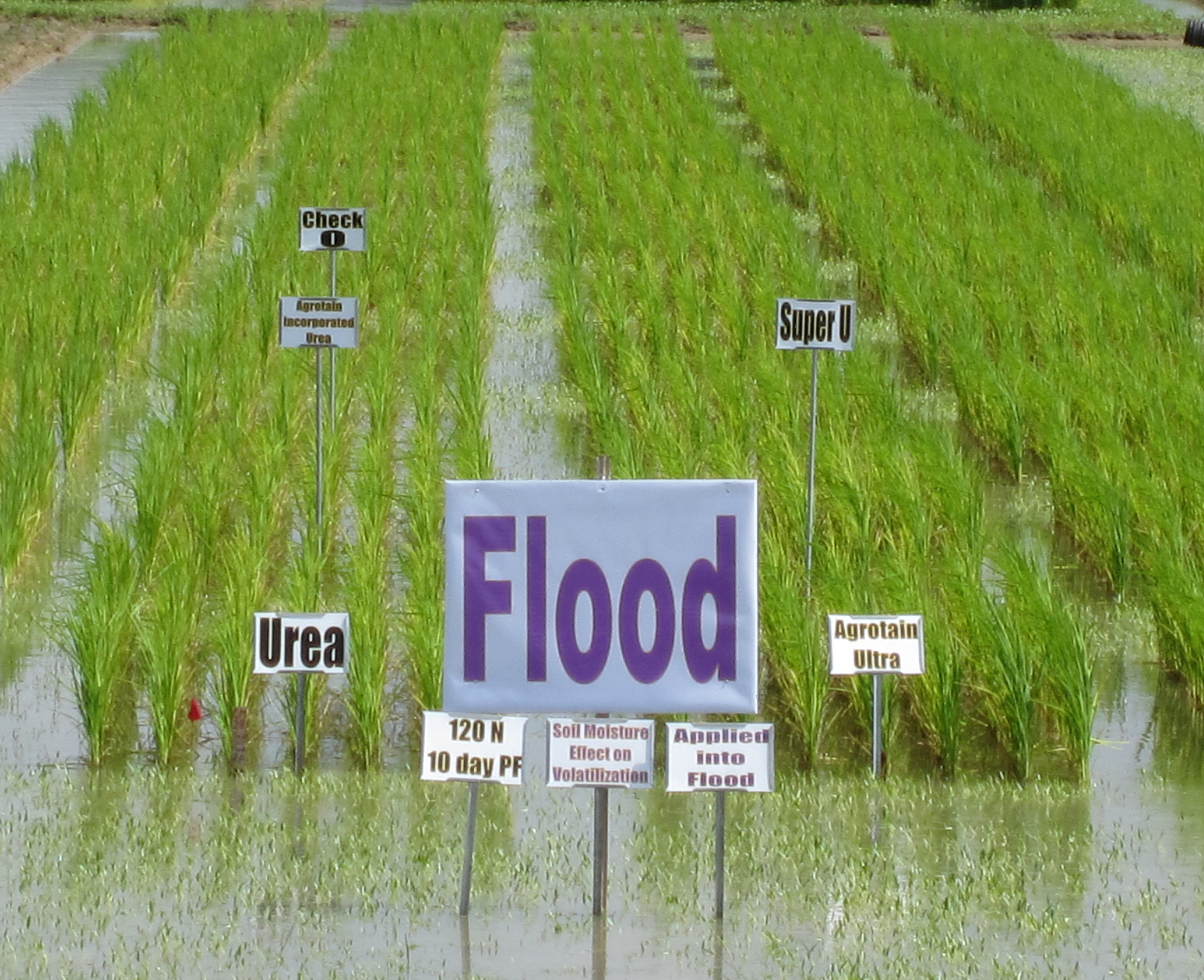 fertilizer study - flooded field.jpg thumbnail