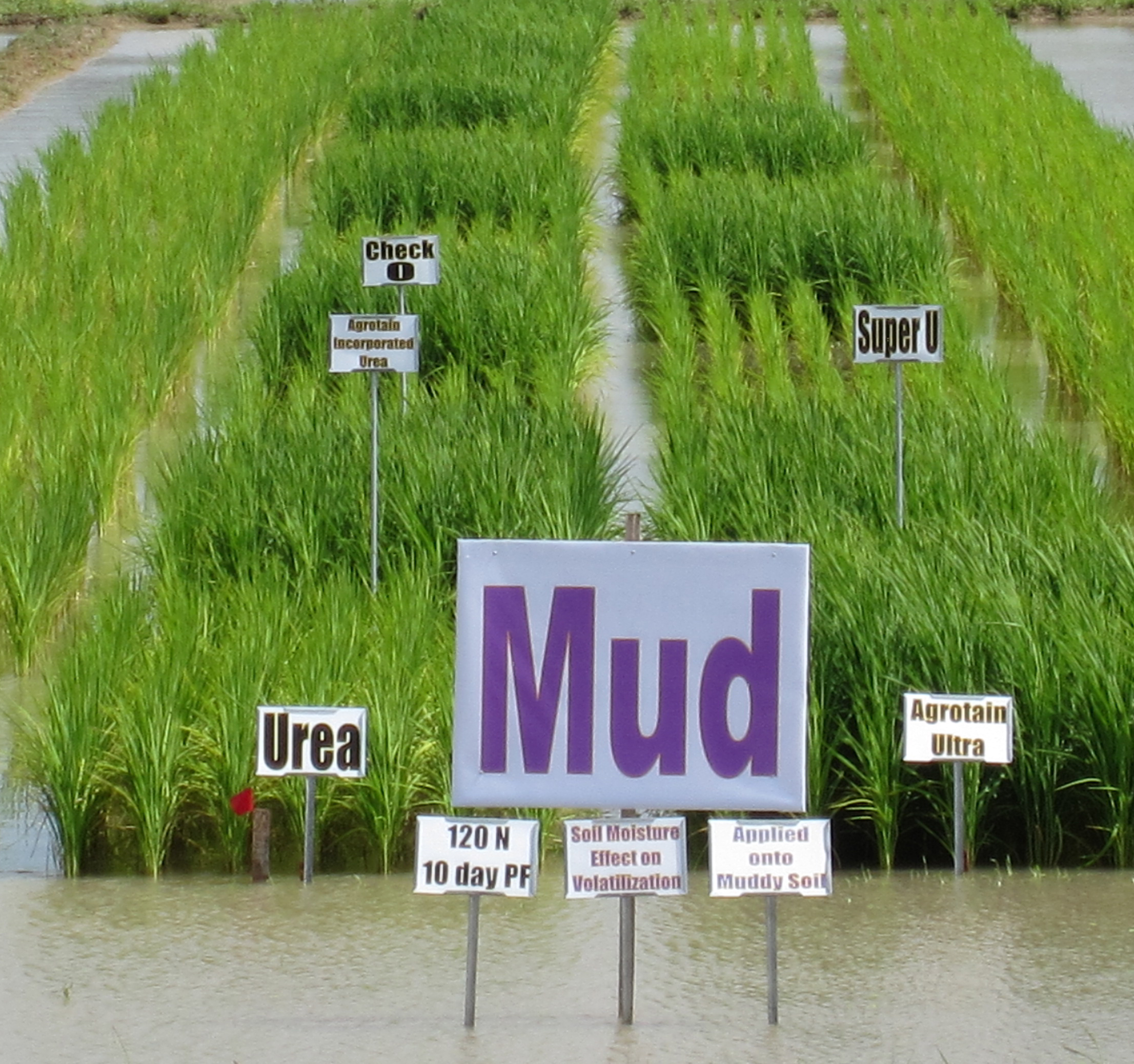 fertilizer study - muddy ground.jpg thumbnail