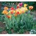 Plant spring-flowering bulbs in fall