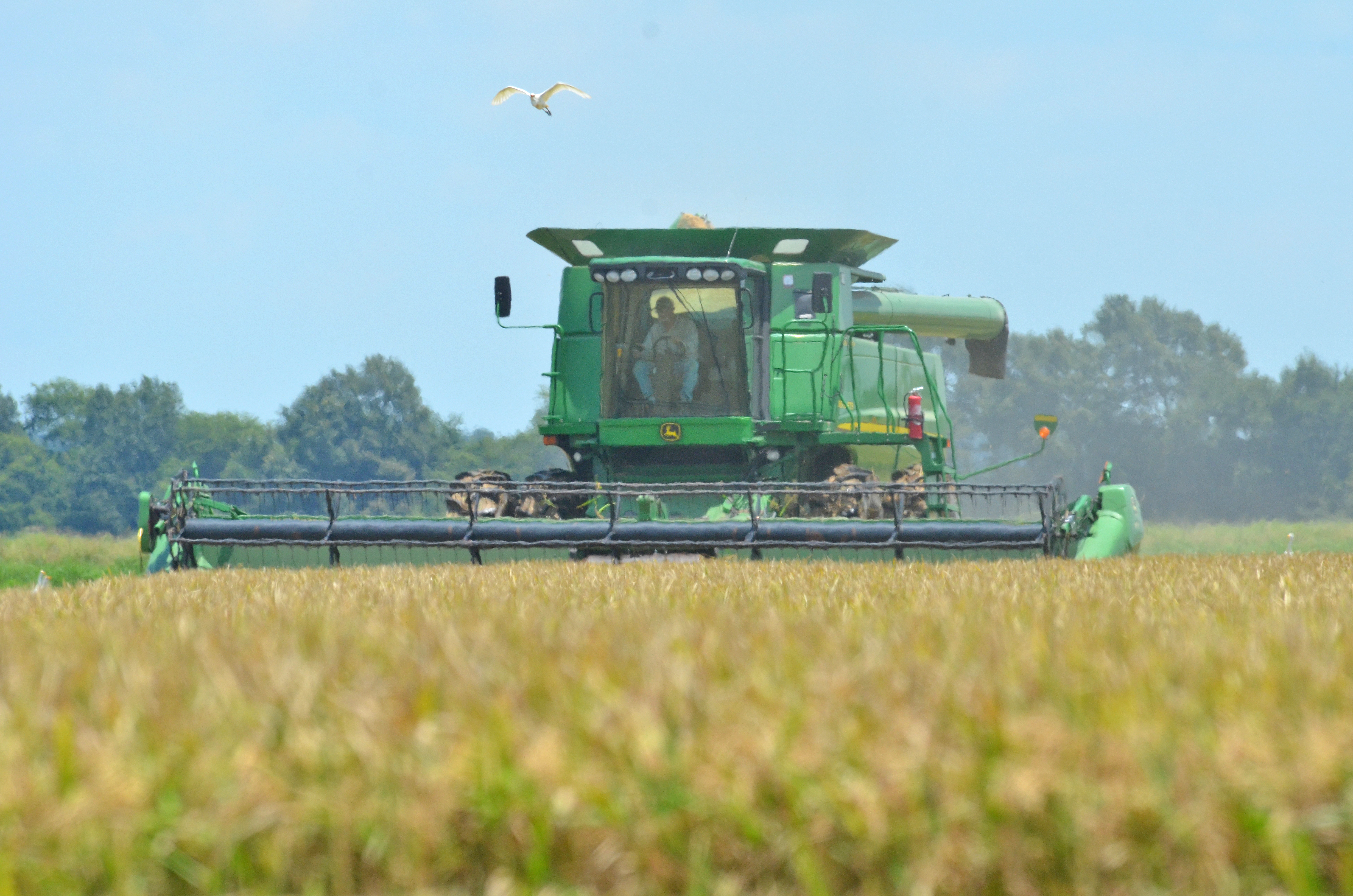 Photo1-combine harvesting ricejpg.jpg thumbnail
