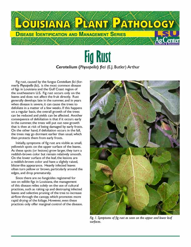 Louisiana Plant Pathology:  Fig Rust