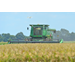 Row rice featured at virtual field day