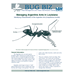 Bug Biz:  Managing Argentine Ants in Louisiana