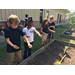 School garden harvest shared with food pantry