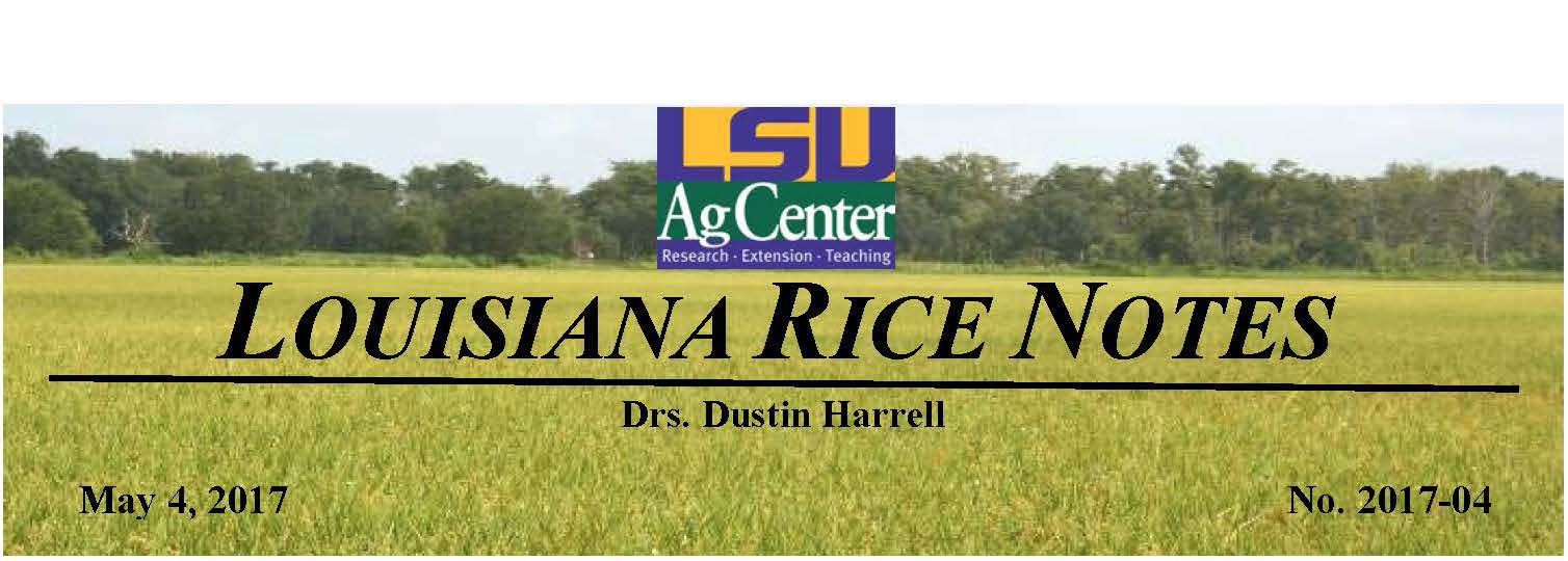 2017 Louisiana Rice Field Notes #4