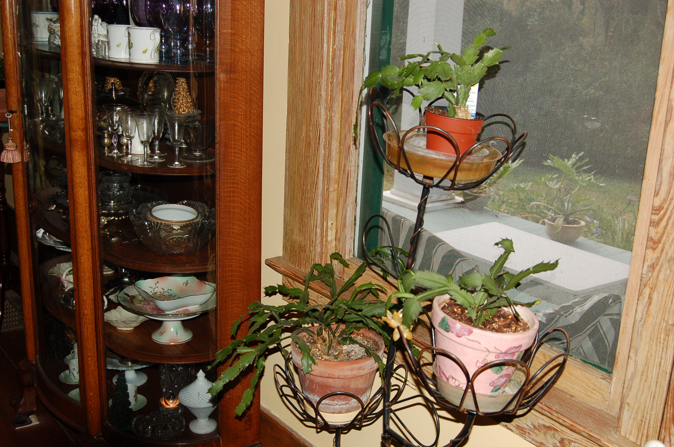 Plan carefully for growing plants indoors